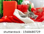 Sleeping Christmas Cat....