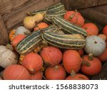 Harvest Of Organic Winter...