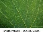Background texture green leaf...