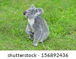 Koala Bear In The Zoo On The...