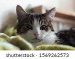 Portrait Of A Grey Striped Cat...