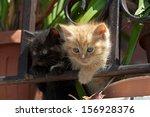 Stock photo little kitten 156928376