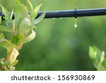 drip irrigation system close up.... | Shutterstock . vector #156930869