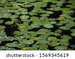 Beautiful Large Green Water...