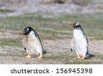 group of gentoo penguins walks... | Shutterstock . vector #156945398