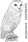 Black And White Polar Owl Bird...