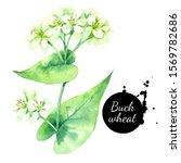 watercolor buckwheat herbs...   Shutterstock . vector #1569782686
