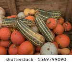 Harvest Of Organic Pumpkins And ...