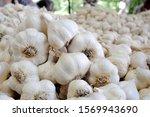 selling garlic at a farmer's... | Shutterstock . vector #1569943690