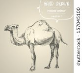 camel. hand drawn vector... | Shutterstock .eps vector #157045100