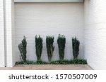 This Minimalist Urban Garden...