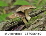 mushroom | Shutterstock . vector #157066460
