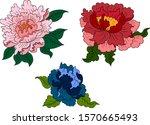 peony flower vector for tattoo... | Shutterstock .eps vector #1570665493
