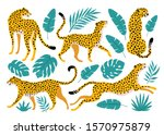 Vector Set Of Leopards And...