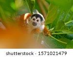 Tropic Nature. Monkey  Long...