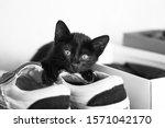 Little Black Cat On Shoes.
