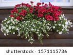Red And White Flowering Plants...