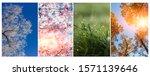 Collage Seasons . All Season....