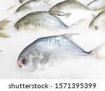 fish in the supermarket  fresh... | Shutterstock . vector #1571395399