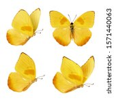 Set Of Four Beautiful Yellow...