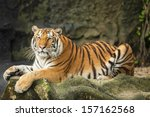 tigers are in the nature of the ... | Shutterstock . vector #157162568