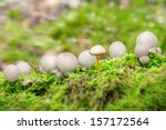 An unknown mushroom in the Puffball community - stock photo