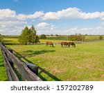 Green Pastures Of Horse Farms....