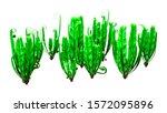 3d rendering of asplenium... | Shutterstock . vector #1572095896
