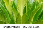 Small photo of leaves palm trees green subtler small