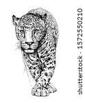 Sketch Of A Walking Leopard....