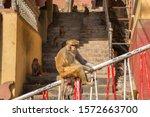 Monkey At Mount Popa  Myanmar ...