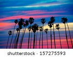 California Palm Trees Group...