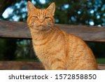 An Orange Cat Sitting In A...