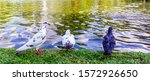Flock Of Pigeons  Dove  Pigeon...