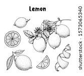 lemon hand drawn collection ... | Shutterstock .eps vector #1573065340