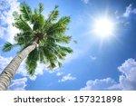 Coconut Tree Under Blue Sky An...