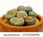 Close Up Group Of Lithops...