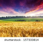 fantastic wheat field at the... | Shutterstock . vector #157333814