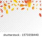 oak  maple  wild ash rowan... | Shutterstock .eps vector #1573358440
