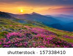 magic pink rhododendron flowers ... | Shutterstock . vector #157338410