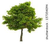 tree isolated | Shutterstock . vector #157354094