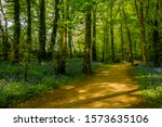 Pathway Through Lush Woodland...