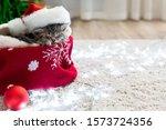 Christmas Cat Wearing Santa...