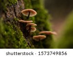 Little Mushrooms To The Woods