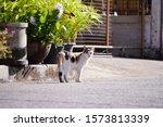 Calico Cat  Cat Walking In...