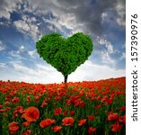 Poppy Field With Tree From The...