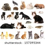 Stock photo collage of different cute animals 157395344