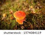 Two Amanita Mushrooms On A Grass