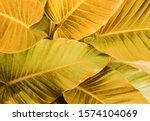 Golden Tropical Leaf Design...