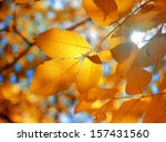 Branch With Yellow Leaves...